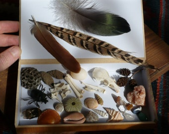 Box of Wonders, Collection of Objects found in Nature, Nature Lovers Gift Box