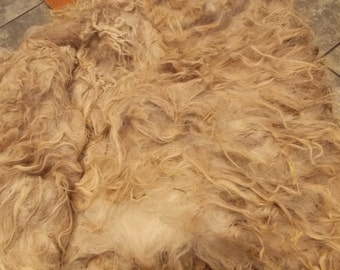 Unwashed Shetland Sheep Wool LOki 2 lb