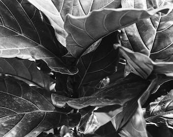 Tropical / Darkroom Print