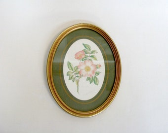 Botanical Rose Floral Art Print with Oval Gold Tone Frame, Elizabeth A Sheppard Avon Rosa Canina Rose Print, Made in Great Britain