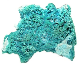 Plancheite Crystals Rare Turquoise Blue Copper Mineral with Chrysocolla, Specimen for the top shelf of your gem, rock and mineral collection