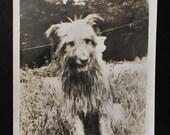 Original Vintage Photograph Boots 1946