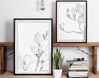 A set of two Magnolia drawings