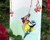 ACEO Limited Edition 1/25 - Sweet bird, Blue tit in berries, Bird art print of an ACEO original watercolor by Anna Lee, Gift for bird lovers