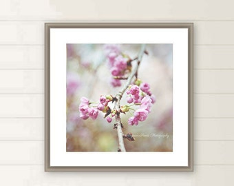 Spring blossoms photos, Cherry Blossom photo, Sakura, Flower buds, budding, oversized large wall art, square wall art, Dreamy Pastel, gift