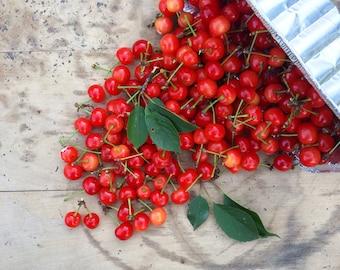 Spilled Cherries Kitchen Square Photograph Fine Art Print