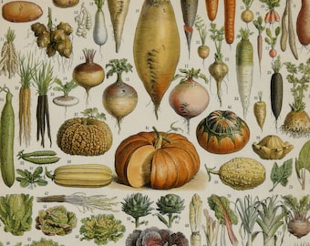 1910 VEGETABLES and LEGUMES, antique fine lithograph. 106 years old print