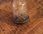 Jinny Jo Dandelion wishes in a jar