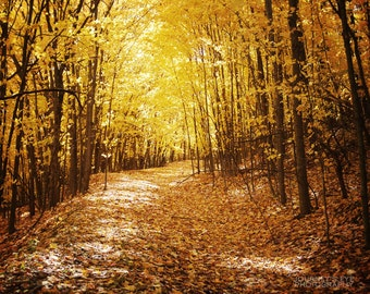 Golden Fall - nature photography, autumn, gold, yellow, forest, dreamy landscape, fall decor, wall art