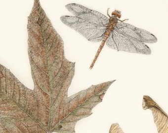 Dragonfly with Maple Leaf (Limited Edition Print)