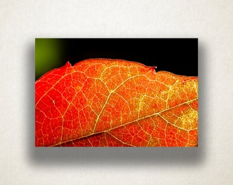 Autumn Leaf Canvas Art, Leaf Close Up Wall Art, Leaf Canvas Print, Close Up Wall Art, Photograph, Canvas Print, Home Art, Wall Art Canvas
