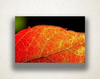 Autumn Leaf Canvas Art, Leaf Close Up Wall Art, Leaf Canvas Print, Close Up Wall Art, Photograph, Canvas Print, Home Art, Wall Art Canvas