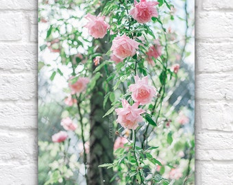Portland Rose City Photography Print, Shabby Chic Pink and Mint Art, Braid, Pastel Tones, Girls, Women, For Her, Oregon, Pacific Northwest
