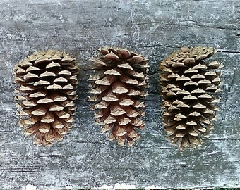 Pine Cones - Natural Rabbit Toys - Natural Pet Treats - Natural Pet Toys - Organic Pet Chews - Pet Toys - Rabbit Treats - Natural Pet Chews