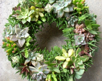 Succulent Wreath 11 inch diameter