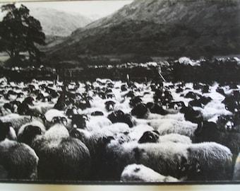 Vintage Large Black and White photograph.... circa 1977.