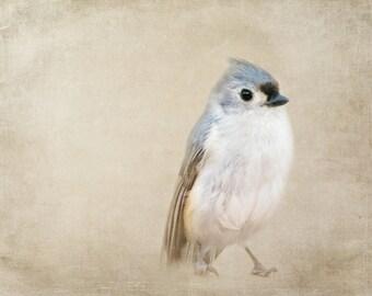 Bird Photography - Living Room Wall Art - Nature Photography - Blue Bird - Bird Print - Bedroom Wall Art