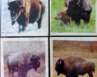 Buffalo coasters - Travertine Coasters  - stone coasters - Buffalo marble coasters - Bison coasters - animal coasters - Tile Coasters