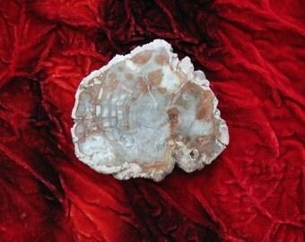 Petrified Wood Slab, Healing Stones, Healing, Fossils, Healing Crystals, Wood Slab