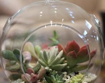 Succulent Terrarium, Succulent Arrangement
