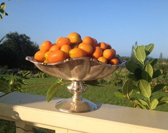 Kumquat SEEDS-organically grown in Maui, HAWAII-grow your own adorable miniature fruits-Kumquat is Container suitable-Fun Samples included