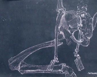 ORIGINAL PEN & INK Drawing/ Vintage Skeleton Study