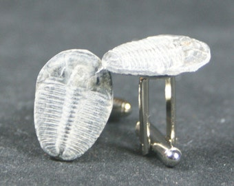 Trilobite Fossil Cufflinks No. 10  Free Cufflink Box By Cufflinked