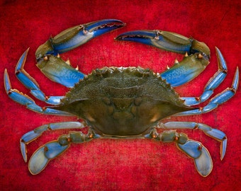 Blue Crab Art in Red