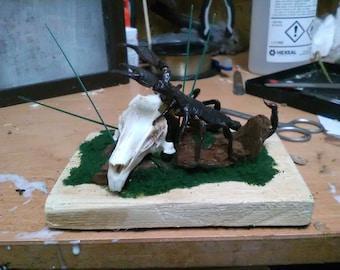 Imperial Scorpion on Real Rabbit skull 3D Entomology display