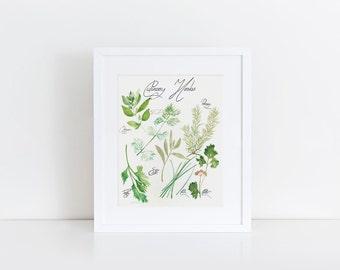 Culinary herbs watercolor art print