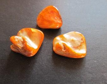3 beads shell medium 20x22x7mm