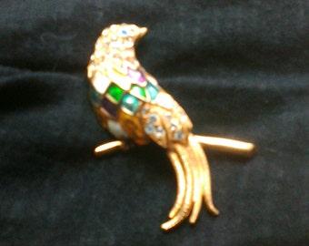 Brooch beautiful tropical bird