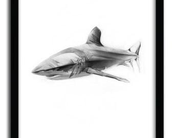 Affiche shark I par Alexis Marcou