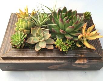 15% off Sale : Live Vertical Garden Succulent/ Cactus Planter Frame Kona Dark Brown color for indoor & outdoor