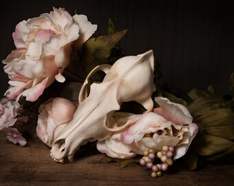 "Fine Art Photography Print- ""Skull and Blush Flowers Still Life"""