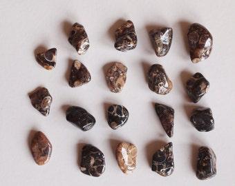 Turritella Agate Tumbled Gemstone - Tumbled Shell Agate - Tumbled Stone - Polished Stone, 19 pieces