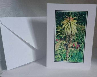 Photography A6 Blank Greetings Card,  Flowers 18 (C612015)