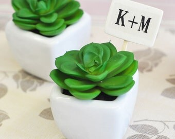 Mini Potted Succulents, (Set of 24)