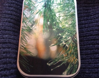 Decorative tin with pine photograph on the cover