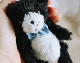 Roy Teddy puppy