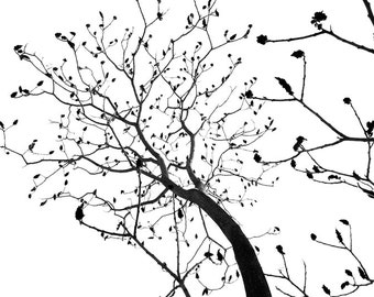 Tree / branches