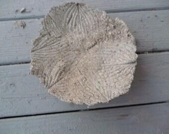 Hosta leaf casting birdbath/birdfeeder