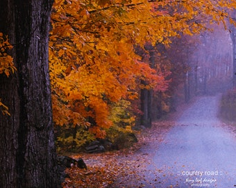 Fall Foliage on a Country Road Original Photography