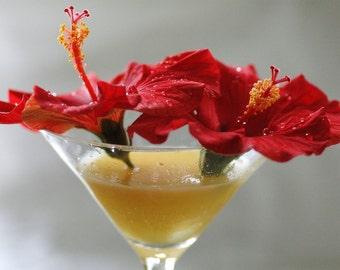 Hibiscus Mimosa