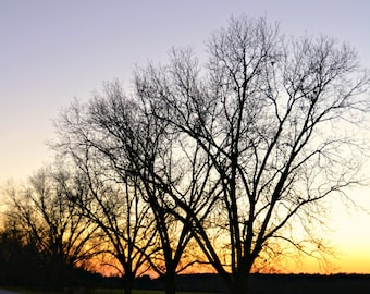 Instant Download Sunset Trees Picture - Wallpaper or Background - Printable 8x10