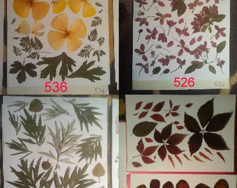 Dried pressed flowers wedding decor or arts and craft embelishment - #536 #526 #493 #14111