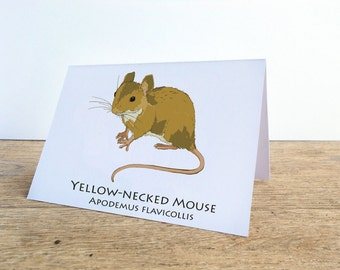 Yellow-necked Mouse Card