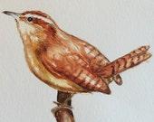 Original Watercolor Birds