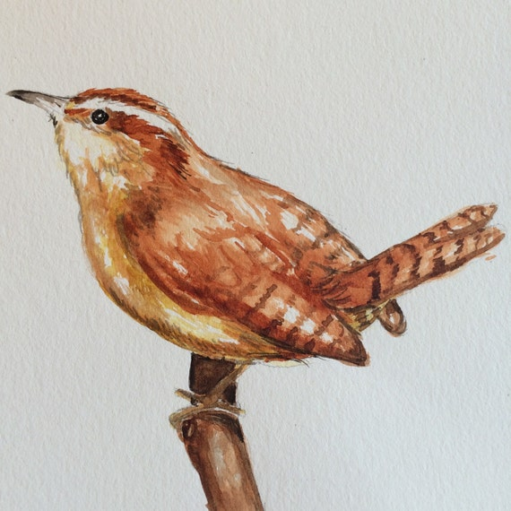 Original Watercolor Birds