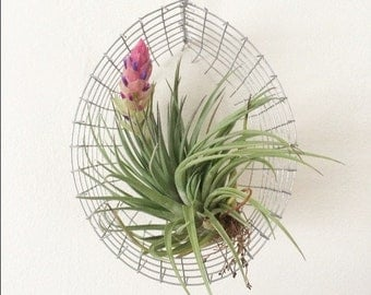 Hanging airplant basket